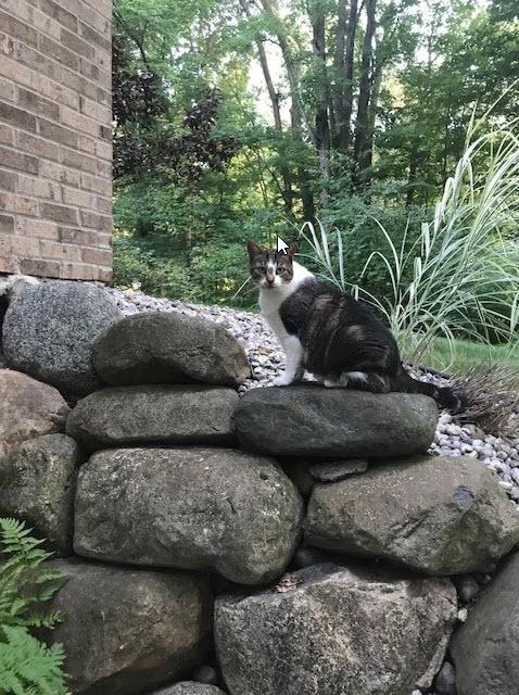 beth's cat | Future Insurance Agency