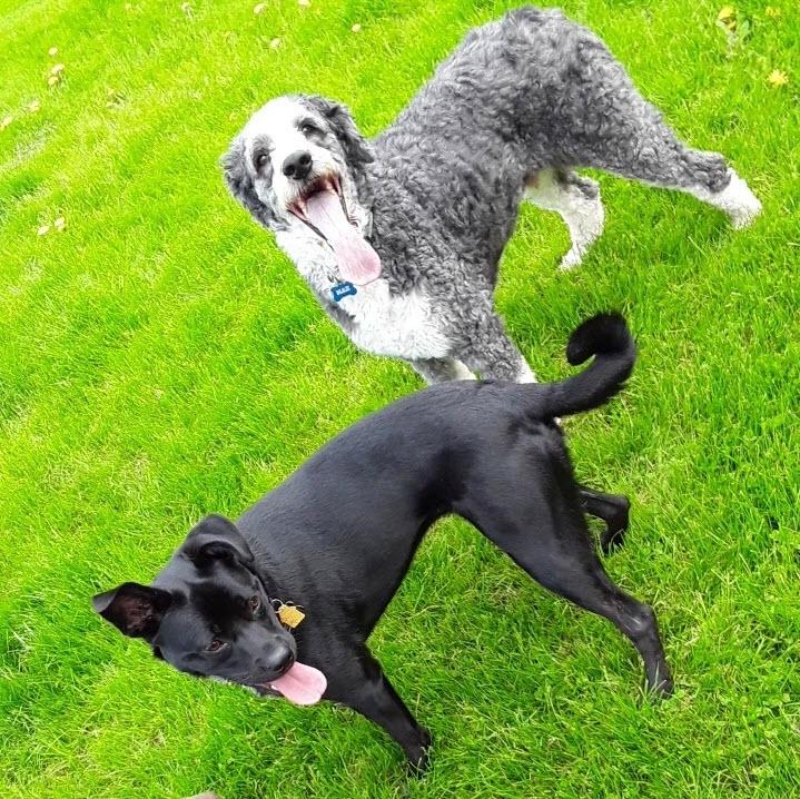 Dawns Dogs | Future Insurance Agency