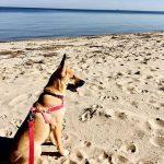 Emma's Dog   Future Insurance Agency