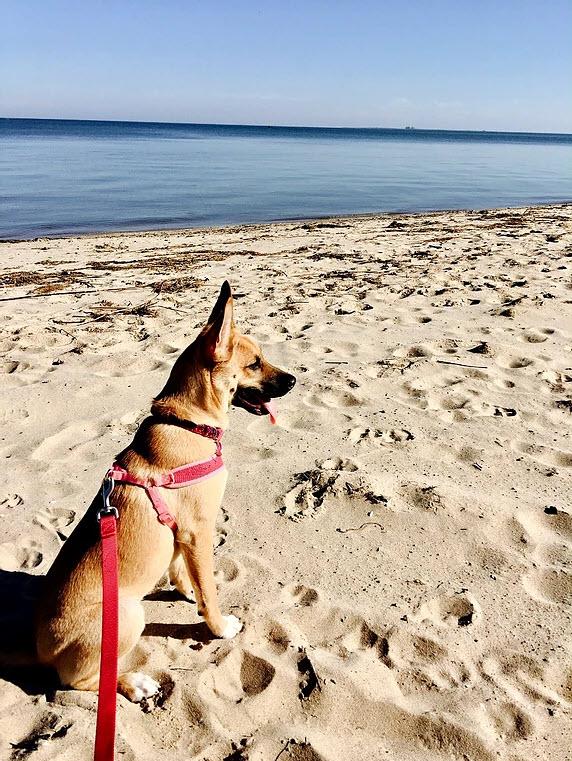 Emma's Dog | Future Insurance Agency