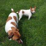 Heidi Dogs | Future Insurance Agency