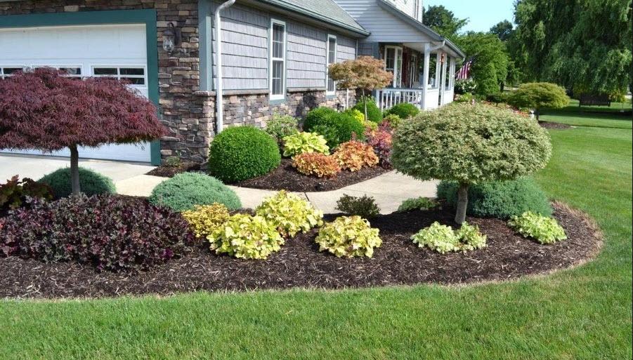 Holly Plants | Future Insurance Agency