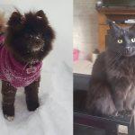 Kristina's Pets   Future Insurance Agency
