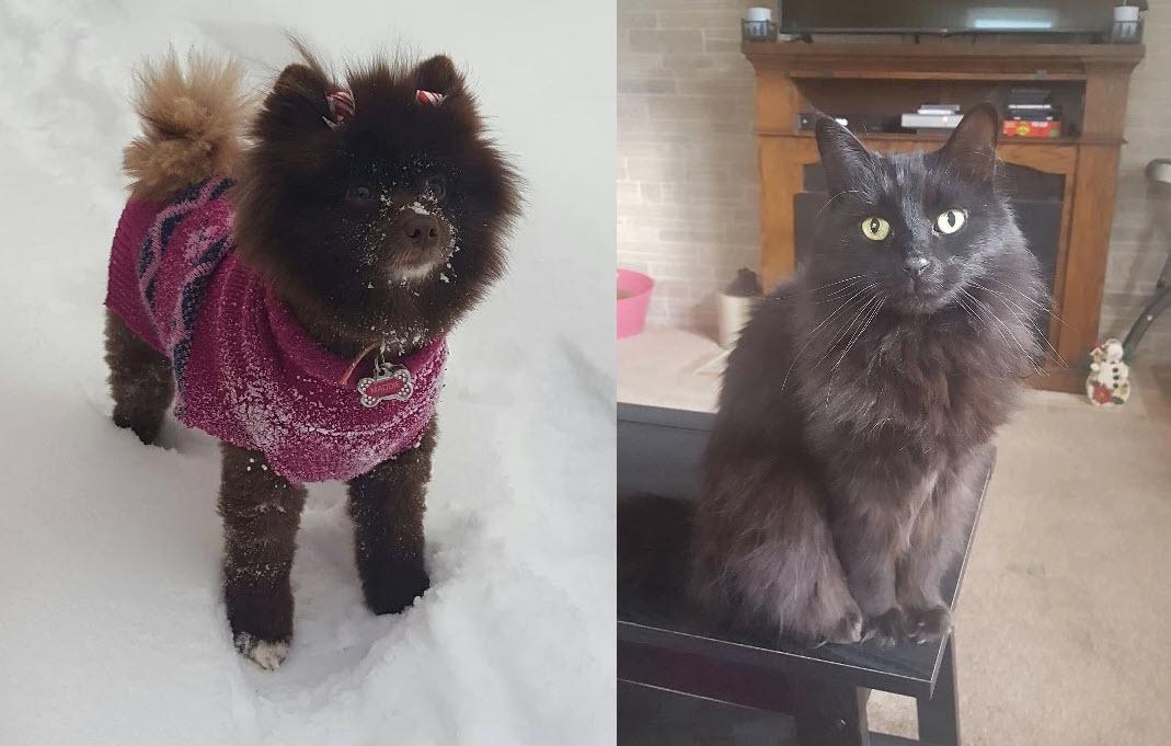 Kristina's Pets | Future Insurance Agency