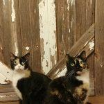Nicole Erickson Cats | Future Insurance Agency