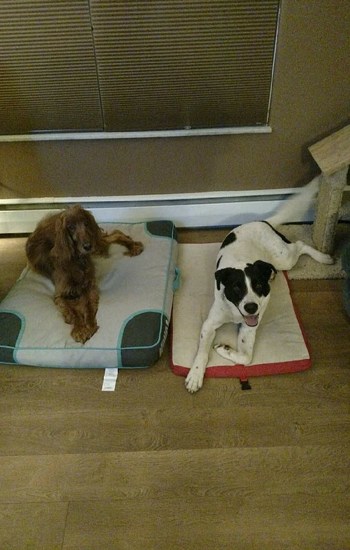 Nicole Erickson pets | Future Insurance Agency